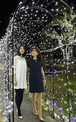 庭園樹木と光のトンネル