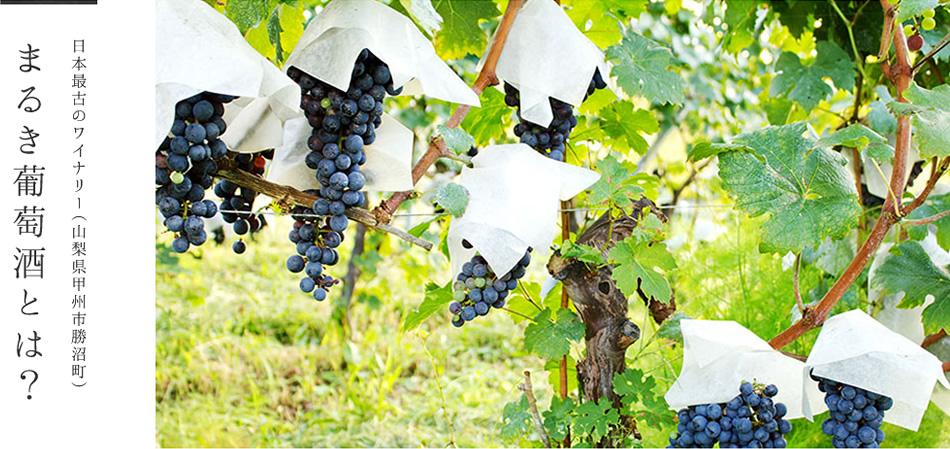 日本最古のワイナリー(山梨県甲州市勝沼町)まるき葡萄酒とは?