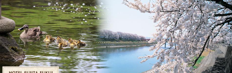 福井・北陸観光情報