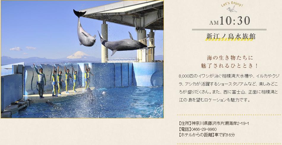 新江ノ島水族館 海の生き物たちに魅了されるひととき!