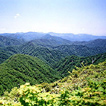 世界遺産 白神山地
