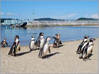 日本一の種類を誇る長崎ペンギン水族館入場券セットプラン