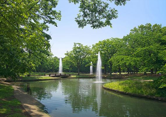 代々木公園画像