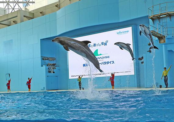 八景島シーパラダイス海の動物たちのショー イルカの画像